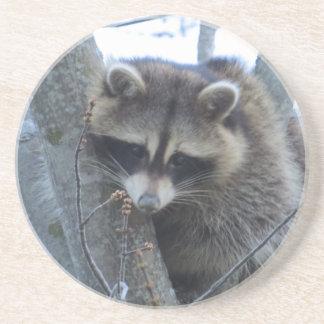 Raccoon Coaster