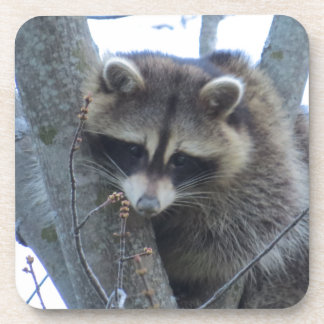 Raccoon Coaster