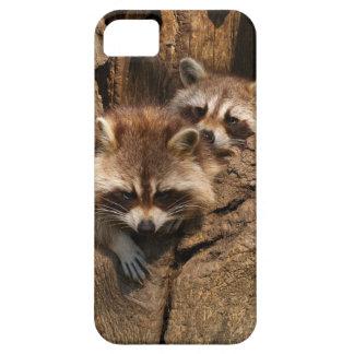 Raccoon cover