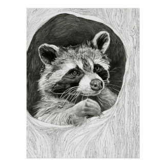Raccoon Drawing Poster