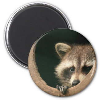 Raccoon hide-and-seek magnet