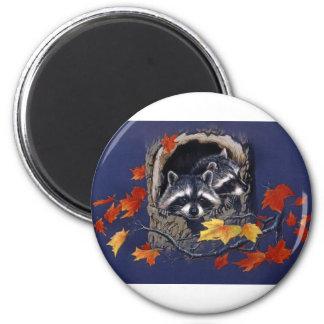 Raccoon Hideaway Magnet
