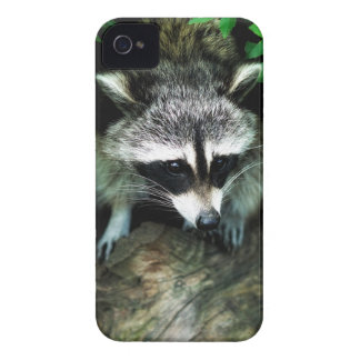 raccoon iPhone 4 Case-Mate cases