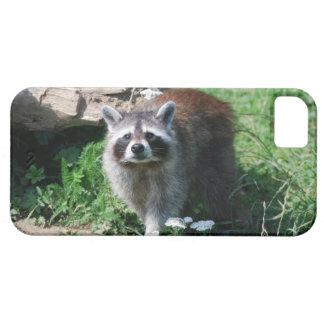 Raccoon iPhone 5 Cases