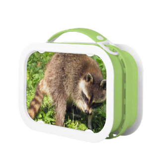Raccoon Lunch Box