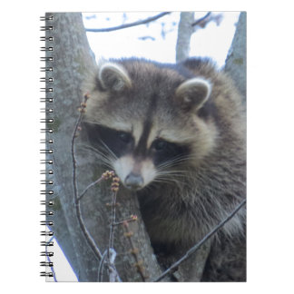 Raccoon Notebooks