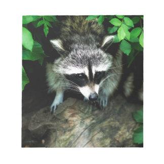raccoon notepads