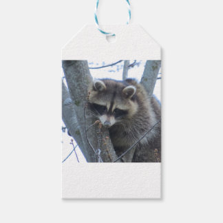 Raccoon Pack Of Gift Tags