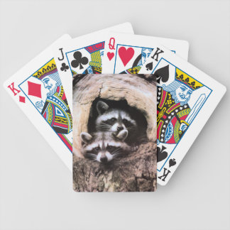 Raccoon Playing Cards