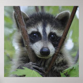 Raccoon Print - #1028