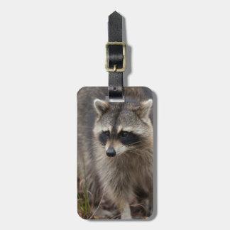 Raccoon, Procyon lotor, Florida, USA 1 Luggage Tag