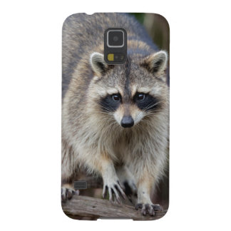 Raccoon, Procyon lotor, Florida, USA 2 Case For Galaxy S5