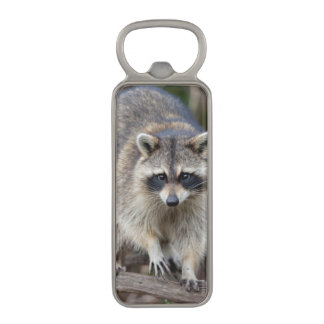 Raccoon, Procyon lotor, Florida, USA 2 Magnetic Bottle Opener