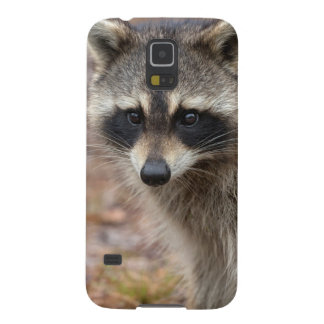 Raccoon, Procyon lotor, Florida, USA 3 Cases For Galaxy S5