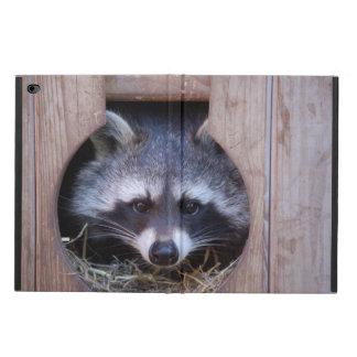 Raccoon Racoon
