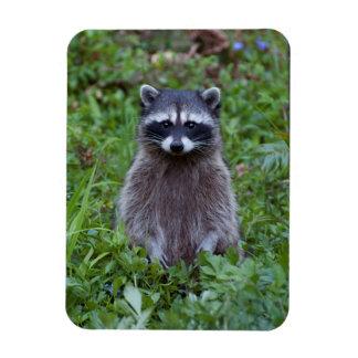 Raccoon Standing Rectangular Photo Magnet