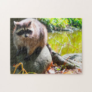 Raccoon Stanley Park Vancouver. Jigsaw Puzzle