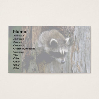 Raccoon-Summer-youngster in hollow tree Business Card