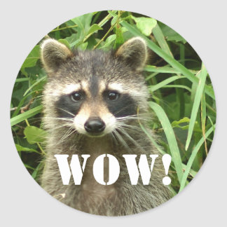 raccoon, WOW! Round Sticker
