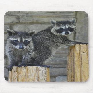 Raccoons - Mousepad - #1032