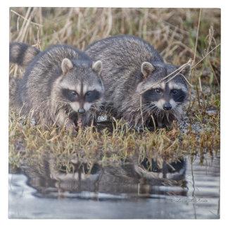Raccoons Tile