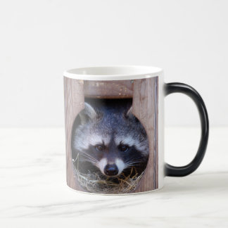 RACE Racoon raccoon - photo: Jean Louis Glineur Magic Mug