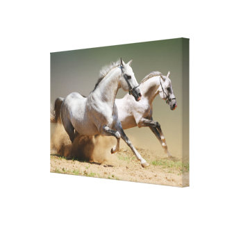 Race the Wind Horses Canvas Print