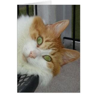Rachel the Cat Card