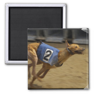 Racing Greyhound Square Magnet