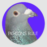 Racing pigeon head blu background, PIGEONS RULE Round Stickers