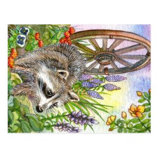 Racoon By Flower Garden Postcard