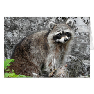 Racoon Greeting Card, Blank Inside Card