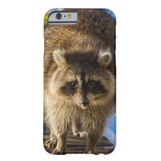Racoon Photo Print Barely There iPhone 6 Case