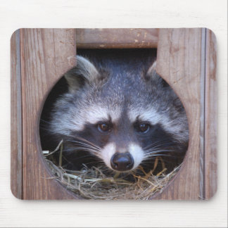 Racoon raccoon mouse pad