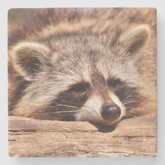 Racoon Stone Coaster