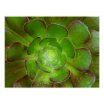 Radiant green succulent plant macro photography poster