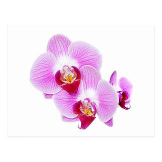 Radiant Orchid Closeup Photograph Postcard