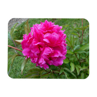 Radiant Pink Peony Rectangular Photo Magnet