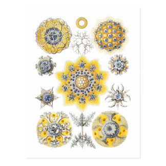 Radiolarians – amoeboid protozoans postcard