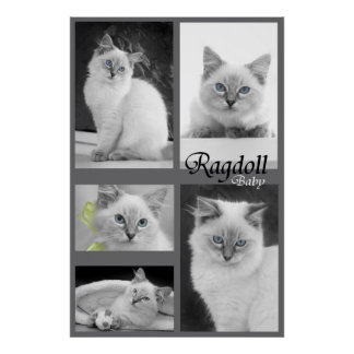 ragdoll baby poster 2