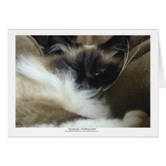 Ragdoll Birman Cat Greeting Card or Note Card