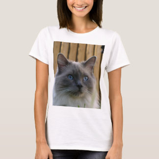 Ragdoll,_blue T-Shirt