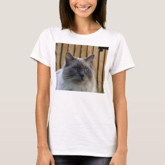 Ragdoll,_blue T-Shirt