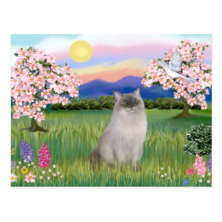 Ragdoll Cat (Blue Point) - Blossoms Postcard