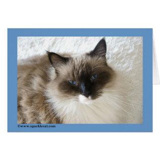 Ragdoll Cat Card