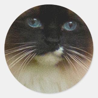 Ragdoll Cat Classic Round Sticker