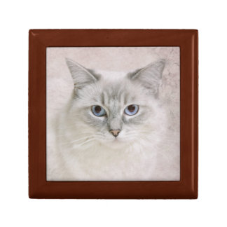 ragdoll cat gift box