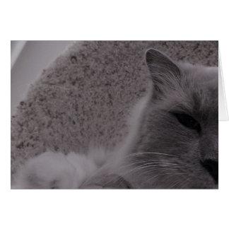 Ragdoll Cat / Noir, card