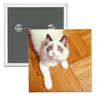 Ragdoll cat on floor, elevated view 2 inch square button