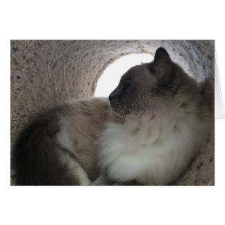 Ragdoll Cat Profile, card